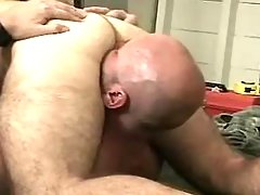 Bear gays lick and suck each other daddy gay porn